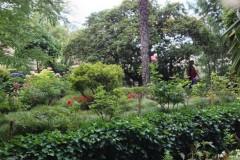 giardino-2